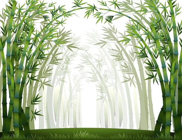 Бамбуковый