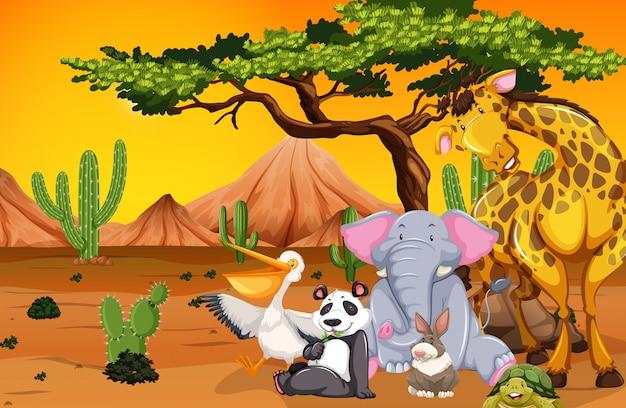 砂漠のシーンで野生動物