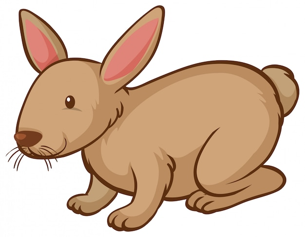Один коричневый кролик на белом фоне
