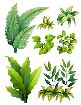 Различные типы листьев