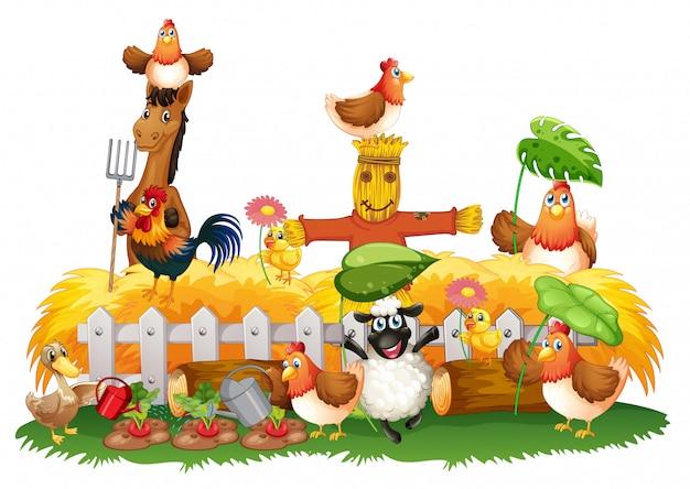 分離された農場の家畜のグループ