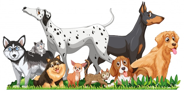 かわいい別の犬グループ