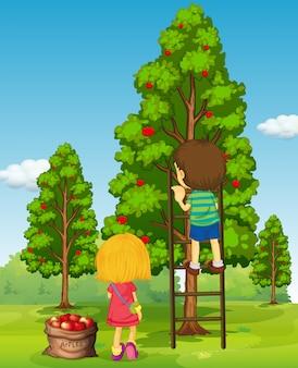 Мальчик и девочка собирают яблоки с дерева