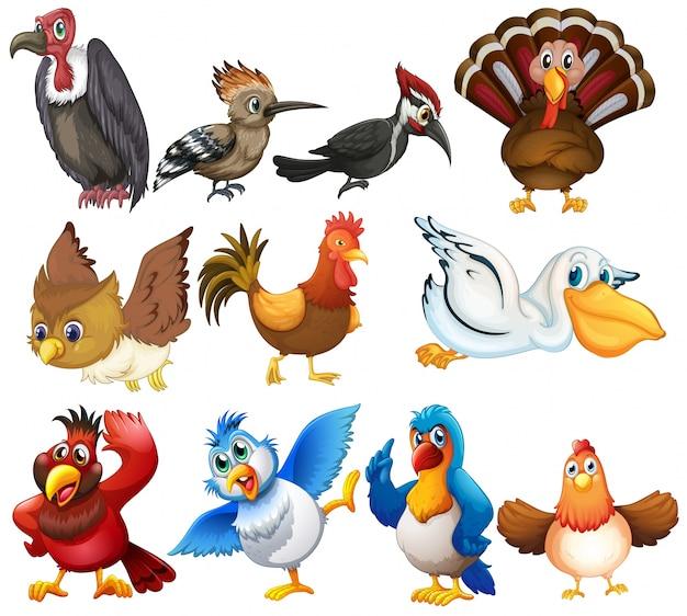 Коллекция птиц