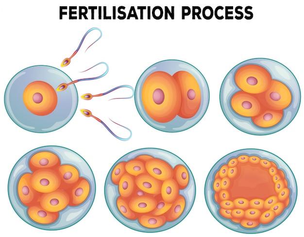 施肥プロセスの図