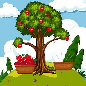 Красная яблоня в поле