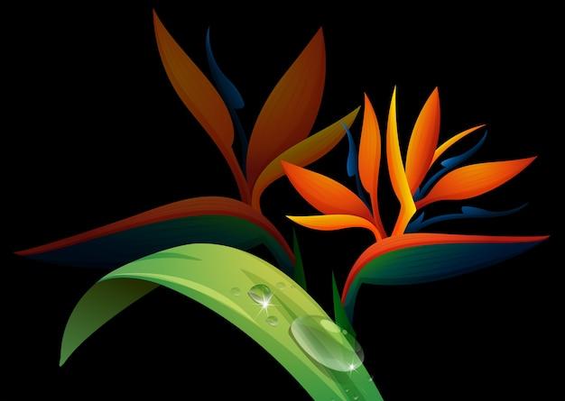 黒背景に鳥の楽園の花