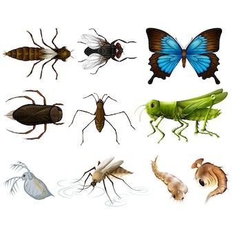 色とりどりの昆虫コレクション