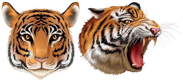 Глава тигров