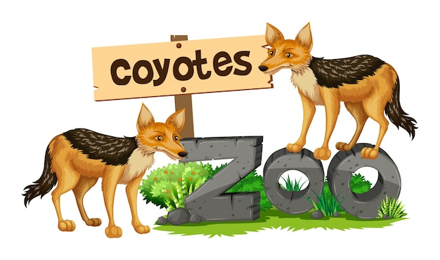 動物園のサインのコヨーテ
