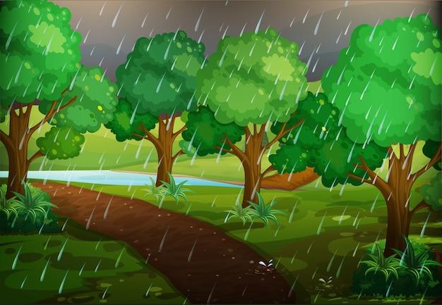 雨の日の森の風景