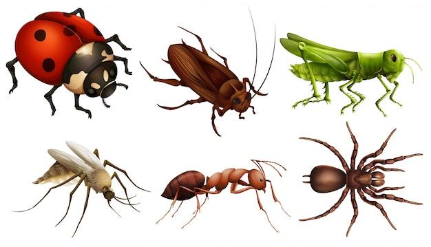 Различные насекомые