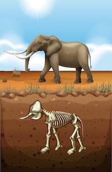 地上の象と地下の化石