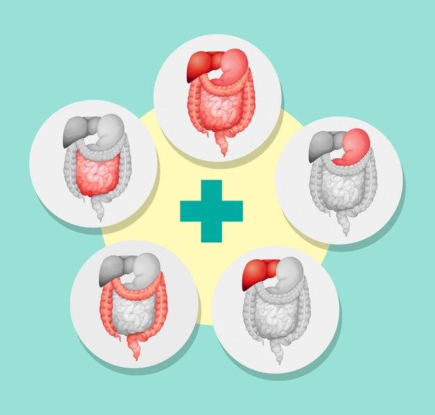 人間のさまざまな器官を示す図