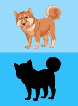 Сиба-ину собака на синем экране