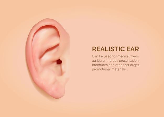 現実的な人間の耳。
