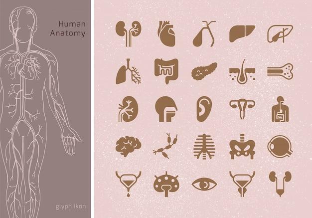 署名を持つ人間の内臓の線形アイコンの大規模なセット。印刷、ウェブ、プレゼンテーションに適しています。