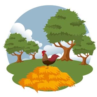 干し草の上に立っているオンドリ