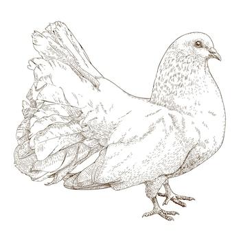 白い鳩のアンティークイラストを彫刻