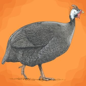 ホロホロ鳥の彫刻イラスト
