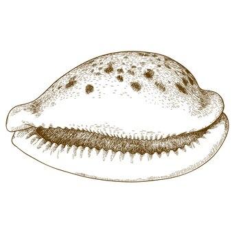 貝殻の彫刻イラスト