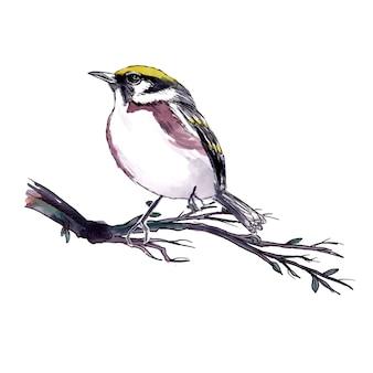 Красивая акварельная птица