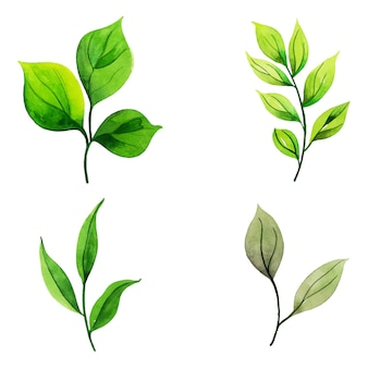 水彩画の葉のコレクション