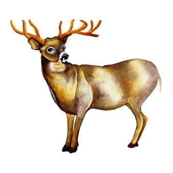 Акварельный олень