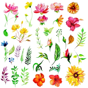 Акварельная коллекция весенних цветов и листьев
