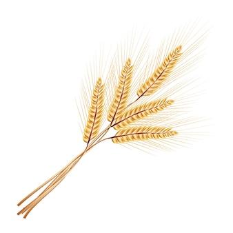 Иллюстрация. куча колосья пшеницы. изолированные на белом фоне