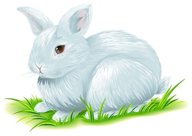 Белый пасхальный кролик сидит на зеленой траве