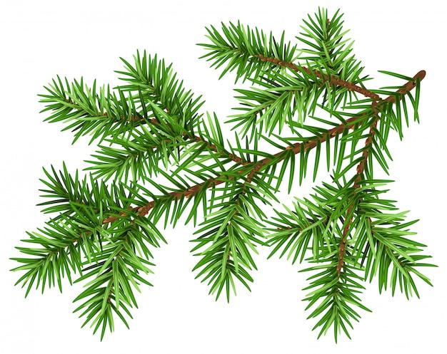 松の木の枝、緑のふわふわの松の枝