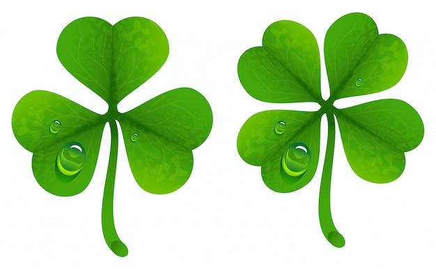 Листья клевера с каплями росы. счастливый клеверный лист. четырехлистный и трехлистный клевер
