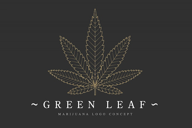 Шаблон логотипа листьев конопли марихуаны