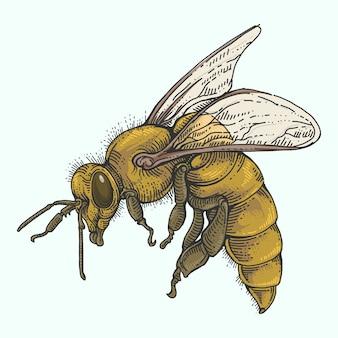 Пчела в цвете рисования рукой