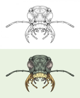 Голова жука в руке рисунок