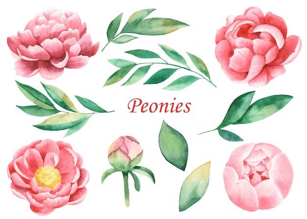 花ピンクの牡丹と葉