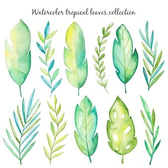 水彩トロピカル葉コレクション