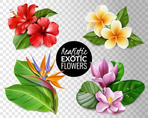 風変わりなエキゾチックな花の透明な背景のセット。透明な背景要素ハイビスカスモクレンストレチアプルメリアと葉の熱帯の花のコレクション。