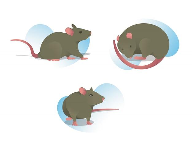 Установите иллюстрацию крысы в разных позах