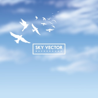 白い鳥と青空の背景