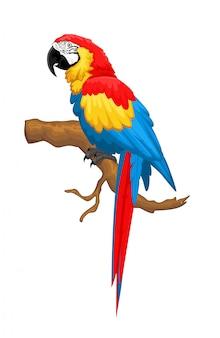 Птица ара