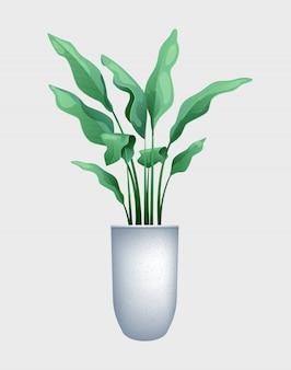 鍋に大きな葉を持つ緑の花