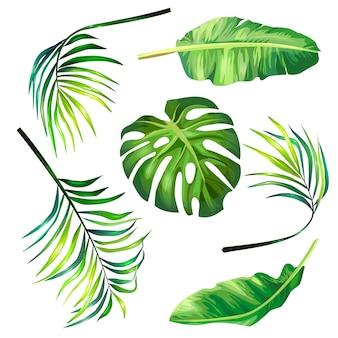 熱帯ヤシの植物的なベクトルイラストのセットは、現実的なスタイルで葉。