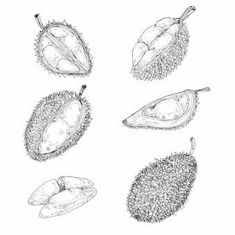 ベクトルイラスト、ドリアンの果実のアイコンのセット