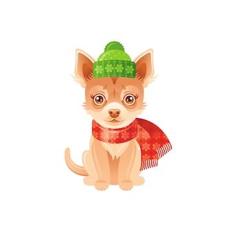 Милый чихуахуа в зимней шапке и шарфе