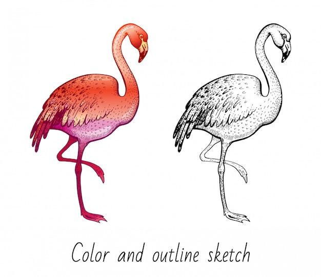Цветной и контурный набросок фламинго