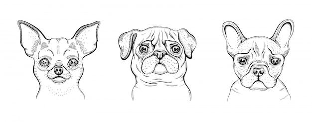 犬、かわいいラインセット。チワワ、パグ、ブルドッグの刻まれたコレクション。