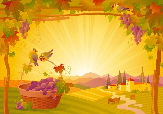 Красивый осенний пейзаж. осень сельской местности с виноградом, виноградником, корзиной и птицами. день благодарения и винный фестиваль векторные иллюстрации.
