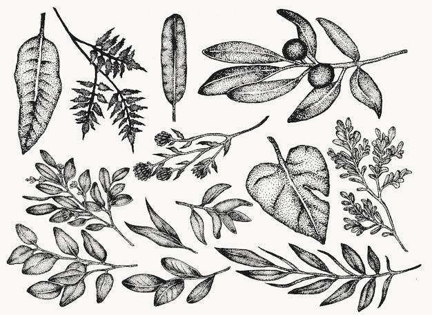 植物のビンテージ植物や花のイラストセット